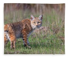 Bobcat Glance Fleece Blanket