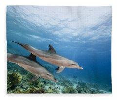 Bottlenose Dolphins Swimming Over Reef Fleece Blanket