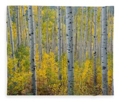 Brilliant Colors Of The Autumn Aspen Forest Fleece Blanket