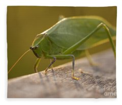 Broad-winged Katydid Fleece Blanket