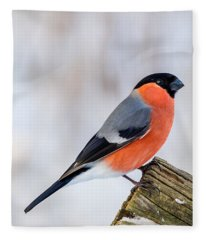 Bullfinch On The Edge Fleece Blanket