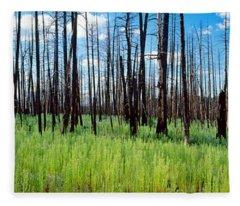 Burnt Pine Trees In A Forest, Grand Fleece Blanket
