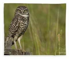 Burrowing Owl Stare Fleece Blanket