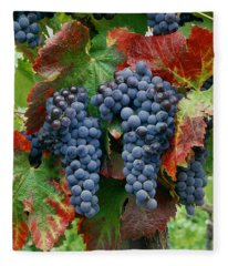 5b6374-cabernet Sauvignon Grapes At Harvest Fleece Blanket
