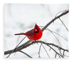 Cardinal On A Branch  Fleece Blanket