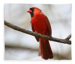 Cardinal On Branch Fleece Blanket
