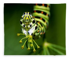 Caterpillar Of The Old World Swallowtail Fleece Blanket