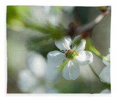 Cherry Blossom. Sunny Day Fleece Blanket