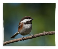 Chestnut Backed Chickadee Perched On A Branch Fleece Blanket