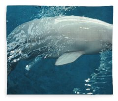Close-up Of A Beluga Whale In An Fleece Blanket