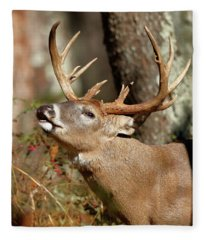 Close-up Of A White-tailed Deer Curling Fleece Blanket