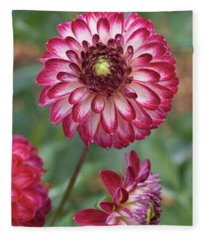 Close-up Of Red And White Zinnia Flowers Fleece Blanket