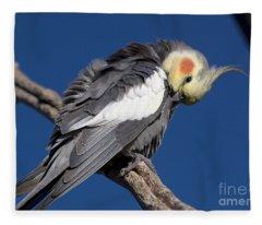 Cockatiel - Canberra - Australia Fleece Blanket