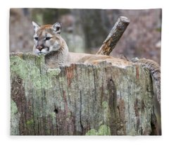 Cougar On A Stump Fleece Blanket
