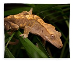 Crested Gecko Rhacodactylus Ciliatus Fleece Blanket