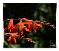 Crocosmia 'dusky Maiden' Flowers Fleece Blanket