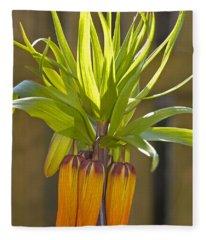 Crown Imperial Fritillaria Imperialis Flower Fleece Blanket