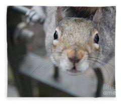 Grey Squirrel Fleece Blankets