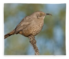 Curve-billed Thrasher Fleece Blanket