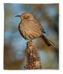 Curve-billed Thrasher On A Cactus Fleece Blanket