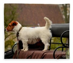 Cute Dog On Carriage Seat Bruges Belgium Fleece Blanket