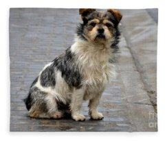 Cute Dog Sits On Pavement And Stares At Camera Fleece Blanket