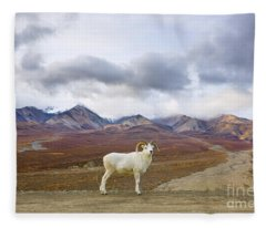 Dalls Sheep Ram Denali National Park Fleece Blanket