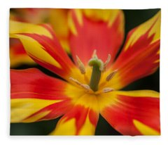 Dappled Tulip 1. The Tulips Of Holland Fleece Blanket