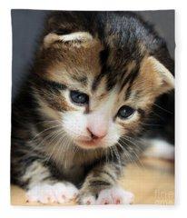Daydreamer Kitten Fleece Blanket