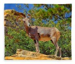 Desert Bighorn Sheep Fleece Blanket