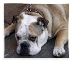 Dog. Tired. Fleece Blanket