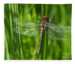 Dragonfly On Grass Fleece Blanket