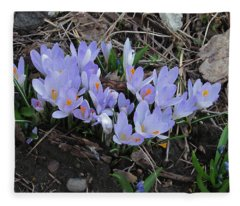 Early Crocuses Fleece Blanket
