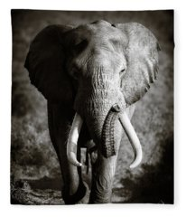 Elephant Bull Fleece Blanket
