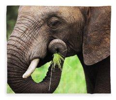 Elephant Eating Close-up Fleece Blanket
