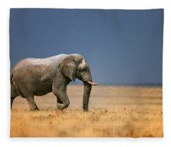 Elephant In Grassfield Fleece Blanket