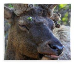 Elk Chuckle Fleece Blanket