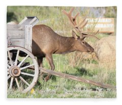 Elk Drawn Carriage Fleece Blanket