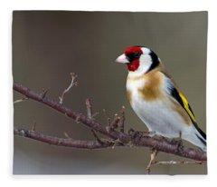 European Goldfinch  Fleece Blanket