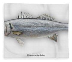 European Seabass Dicentrarchus Labrax - Bar Commun - Loup De Mer - Lubina - Havabor - Seafood Art Fleece Blanket