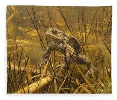 European Toad Noord-holland Netherlands Fleece Blanket