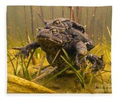 European Toad Pair Mating Noord-holland Fleece Blanket