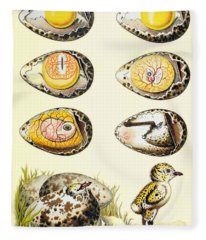 Evolution Of A Chicken Within An Egg Fleece Blanket