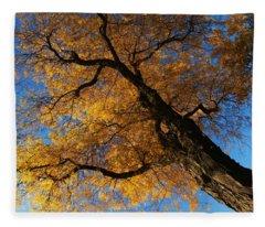 Fall Trees 1 Fleece Blanket