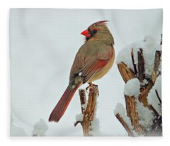 Female Cardinal In The Snow Fleece Blanket
