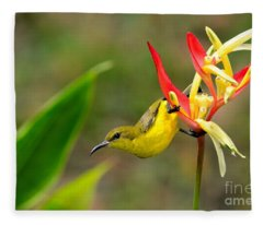 Female Olive Backed Sunbird Clings To Heliconia Plant Flower Singapore Fleece Blanket