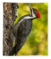 Female Pileated Woodpecker No. 2 Fleece Blanket