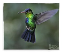 Fiery-throated Hummingbird..  Fleece Blanket
