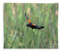 Red Winged Blackbird Fleece Blankets