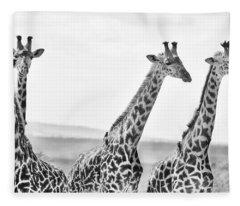 Four Giraffes Fleece Blanket